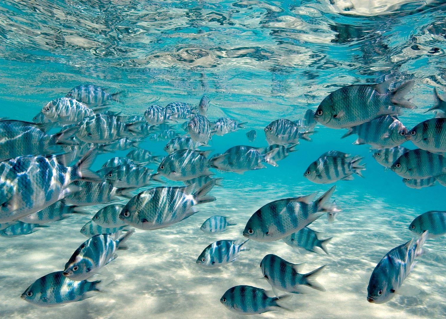 嫌麻烦不吃龙虾的岛国:吃鱼只吃好看的,海参椰子蟹随便吃图片