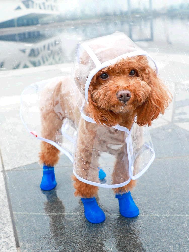 狗狗雨衣宠物大狗防水雨披柯基泰迪雪纳瑞中小型犬两脚春夏狗衣服
