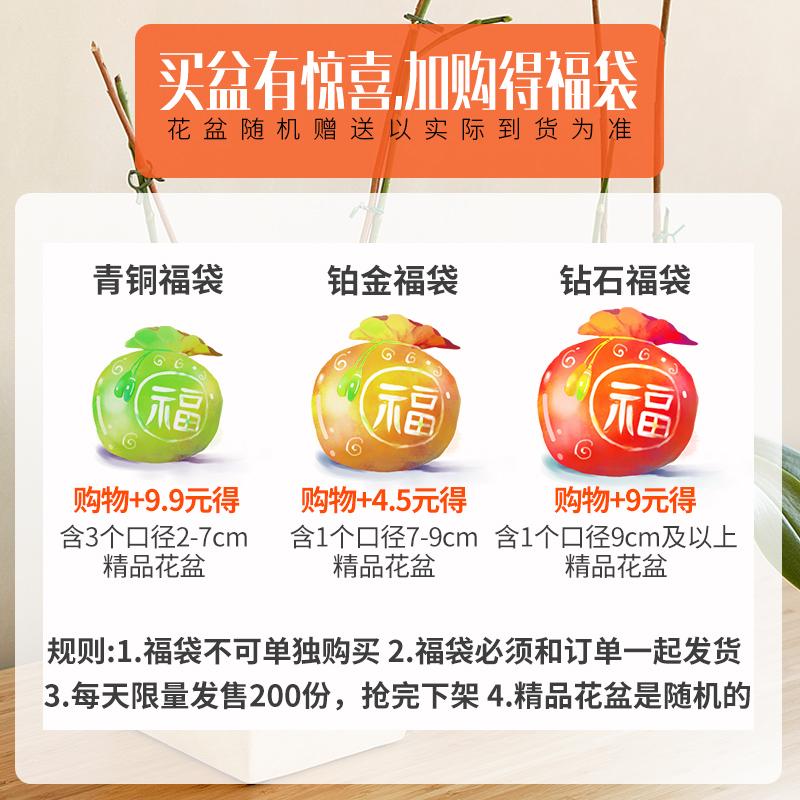 9.9元福袋组合多肉花盆陶瓷清仓包邮特价粗陶简约肉肉植物创意盆