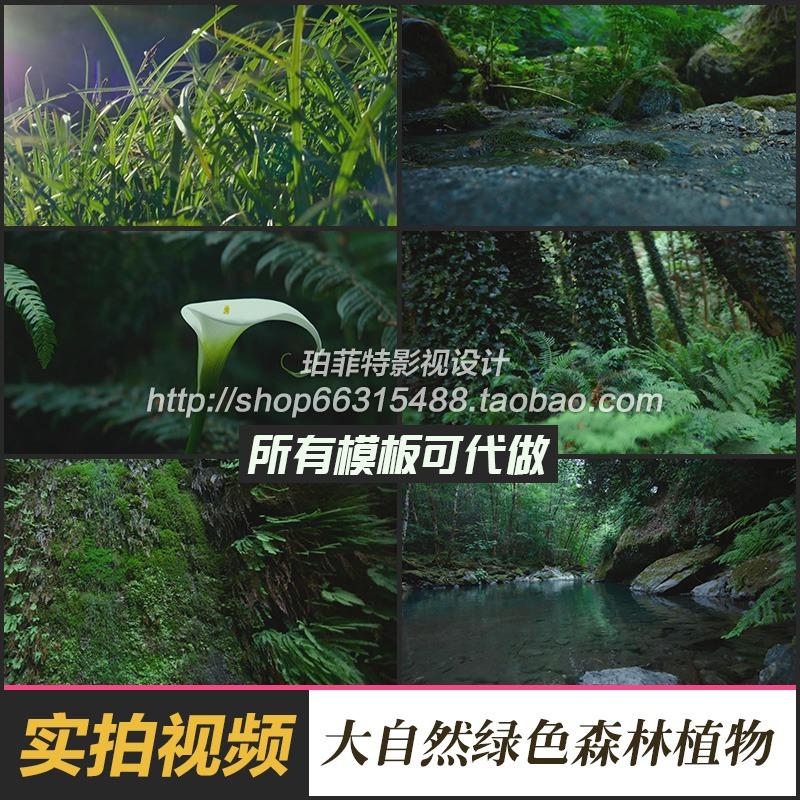 大自然清新小溪流水瀑布树林公园绿色森林植物实景拍摄视频素材