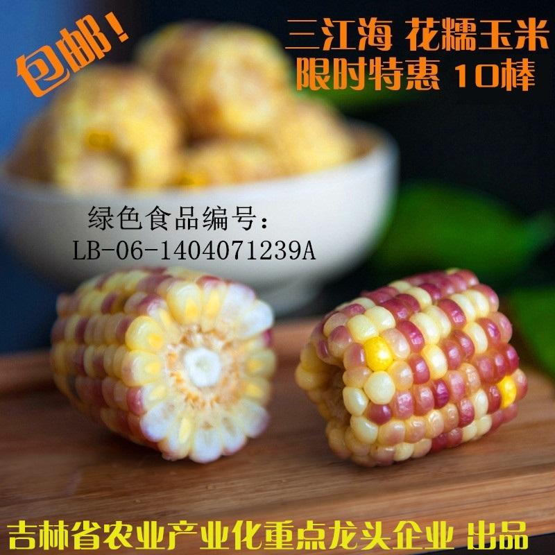 三江海东北玉米新鲜速冻花糯玉米30根甜糯玉米棒12省包邮