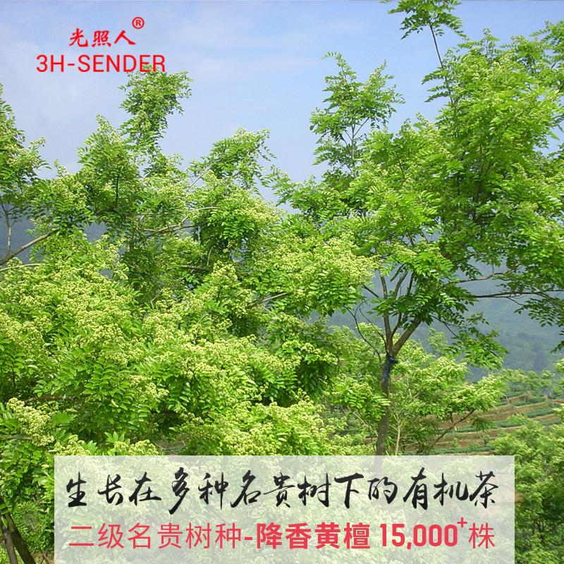 光照人有机铁观音茶叶 浓香型韵香型 乌龙茶叶 送礼礼盒YT-2980D