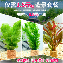 带底座(小)型耐活ge4生植物鱼xe饰红草绿菊活体净化水质