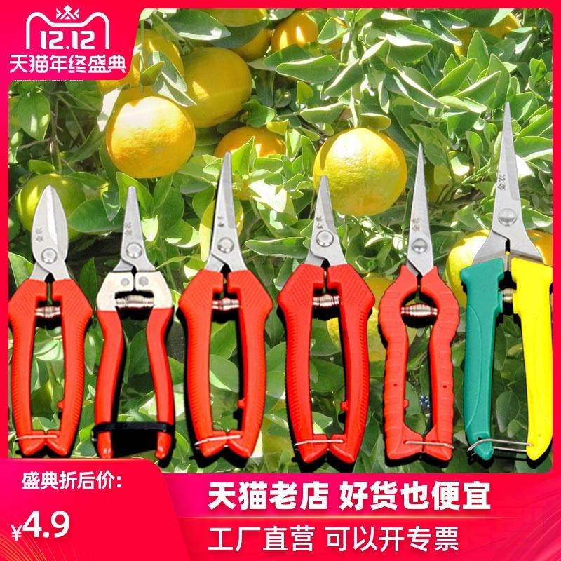 采果剪摘果不锈钢翘头剪刀稀果剪 翘头剪番茄剪园艺剪刀园艺工具