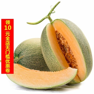 Xinjiang cantaloupe with box of about 10 kg Turpan big netted melon seasonal fresh fruit Xizhou cantaloupe