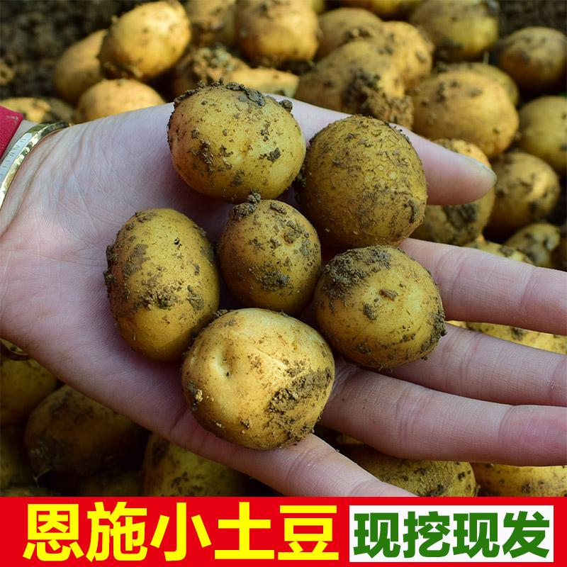 买1送1黄心恩施小土豆新鲜洋芋迷你马铃薯高山土豆农家自种共5斤