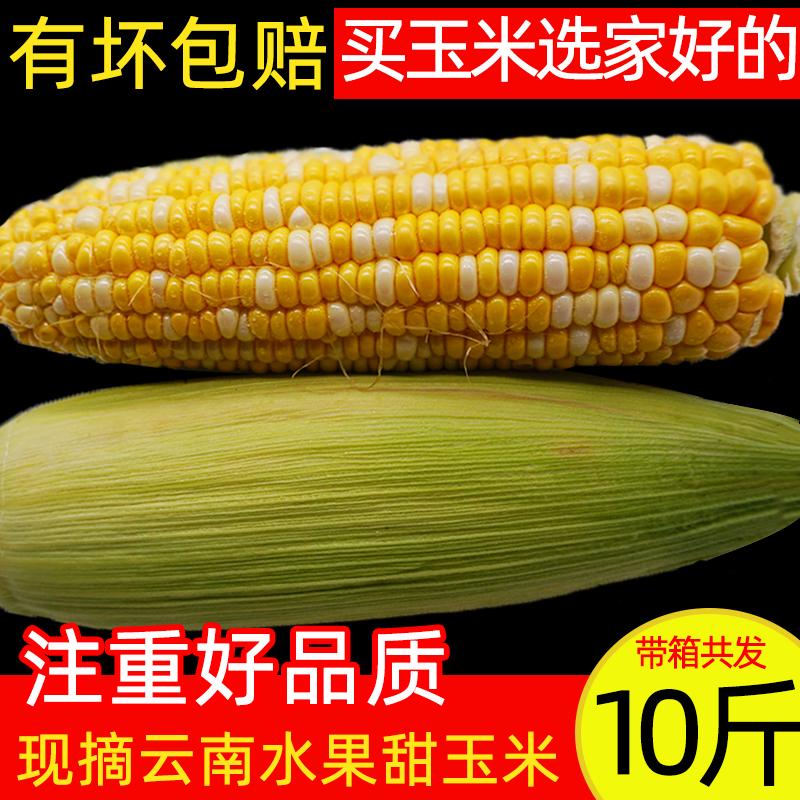 云南甜脆水果玉米新鲜现摘甜玉米糯玉米棒生吃甜脆笨牛奶爆浆10斤