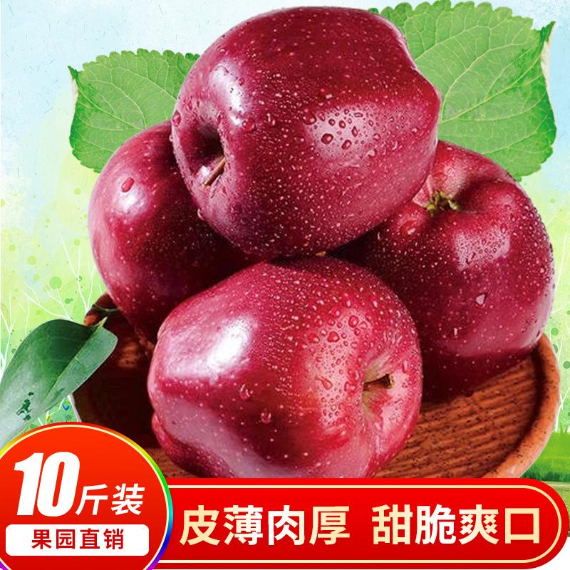 甘肃天水花牛苹果新鲜包邮当季水果刮泥粉面应季带箱10斤红蛇果