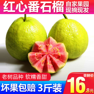 Guangxi Red Heart Guava Guava Fresh Fruit FCL Season Season
