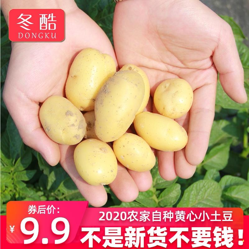 5斤小土豆新鲜现挖黄心土豆农家自种迷你小土豆蔬菜马铃薯洋芋10