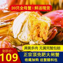 大闸蟹非全母蟹鲜活螃蟹现货20只六月黄全肥满黄新鲜水产顺丰包邮