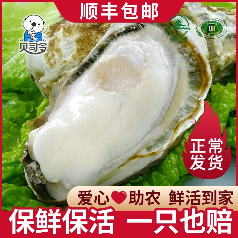 贝司令乳山鲜活生蚝新鲜牡蛎即食海蛎子海鲜水产一箱5斤10斤