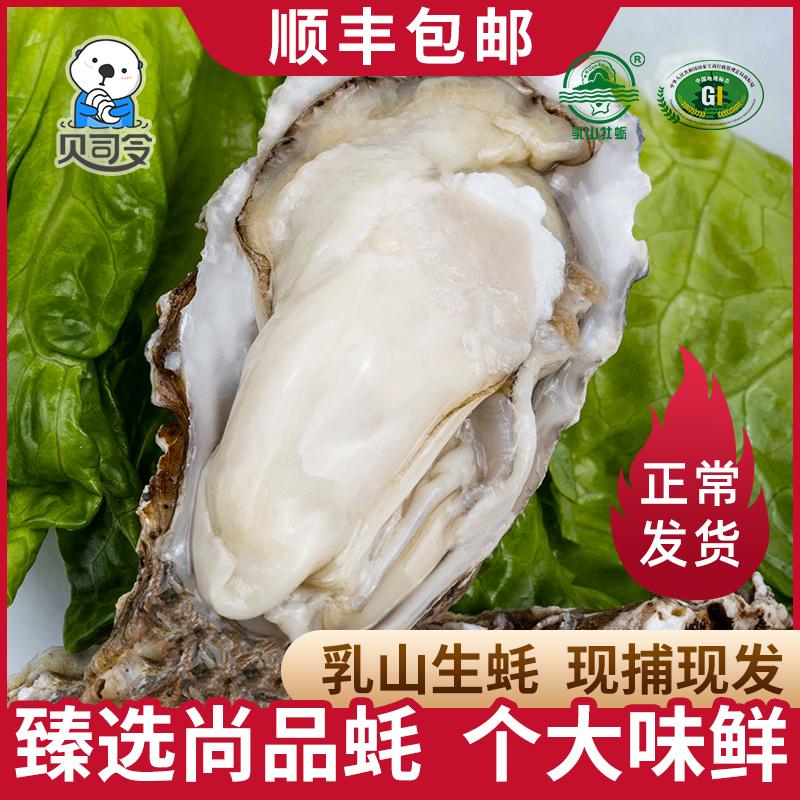贝司令生蚝鲜活乳山特大 5斤 一箱海蛎子新鲜水产牡蛎顺丰包邮