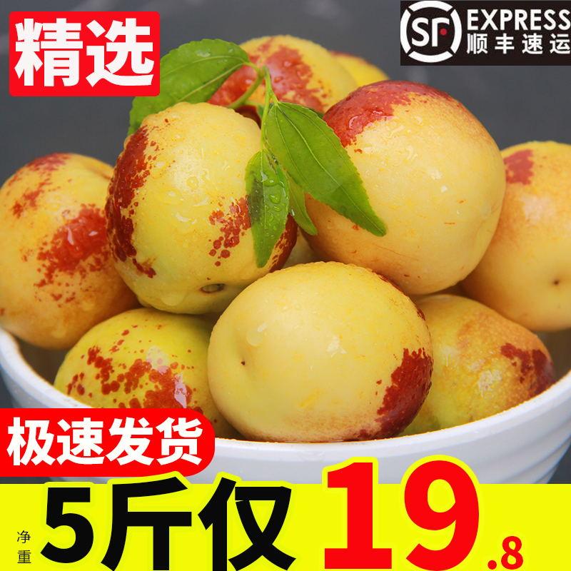 冬枣新鲜5斤脆甜水果现货当季水果非陕西大荔冬枣沾化冬枣大枣子