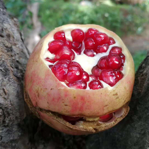 Shaanxi specialty Lintong pomegranate fresh fruit non-soft seed pomegranate 6-9 pieces net weight 3.5 kg / 5 kg