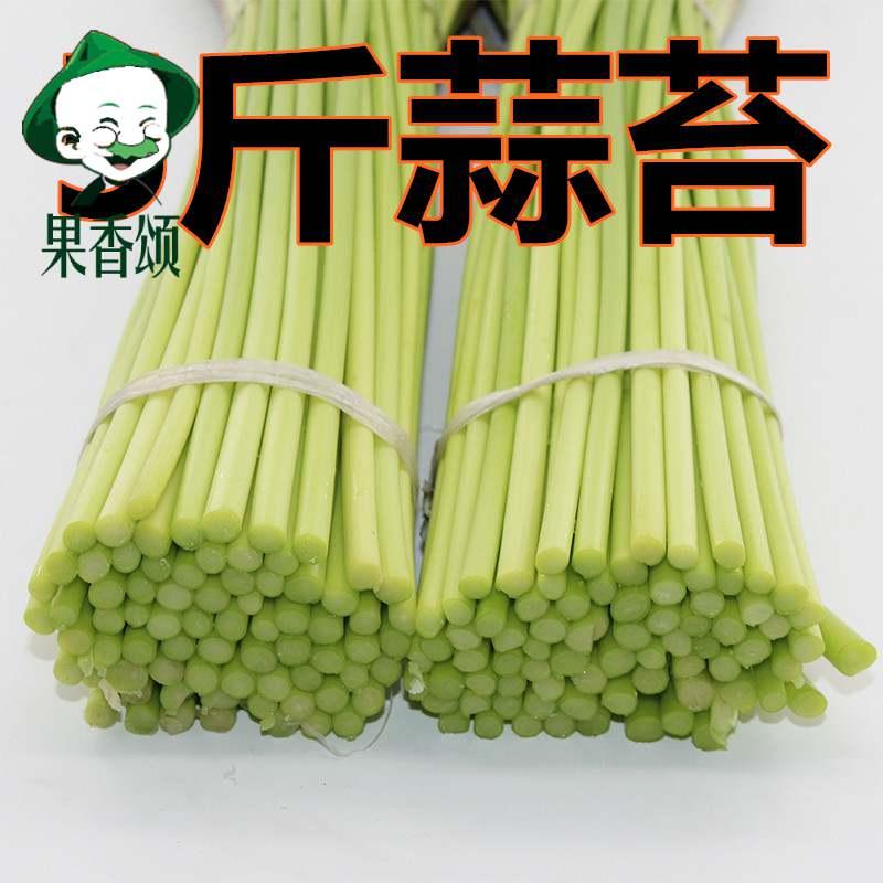 2020年新鲜蒜苔净重5斤河南开封杞县产地直销新鲜蔬菜蒜薹