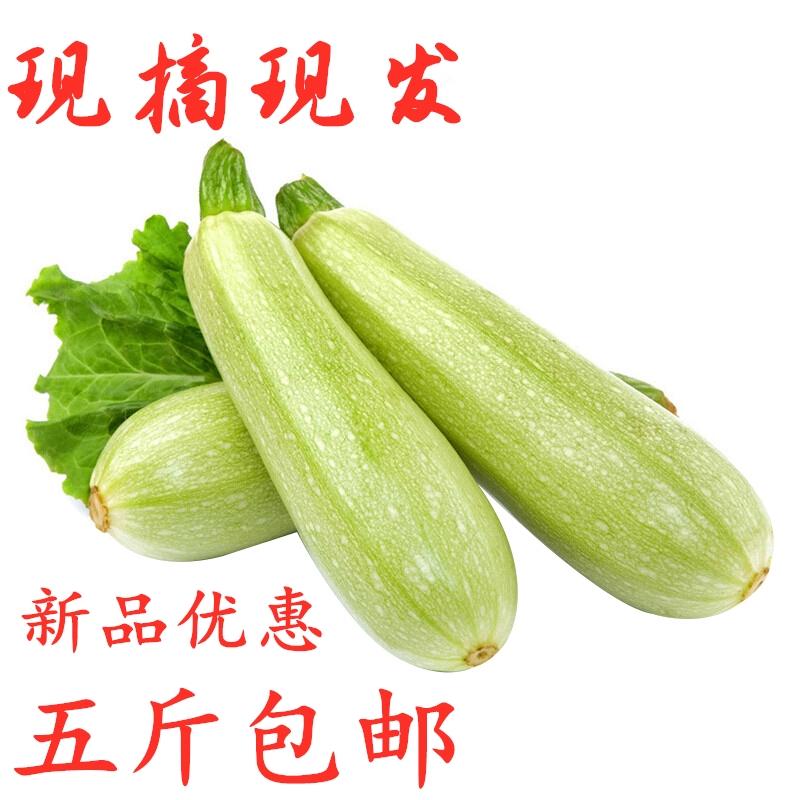 5斤装山东现摘新鲜西葫芦当季新鲜蔬菜茭瓜小瓜三月瓜番瓜包邮