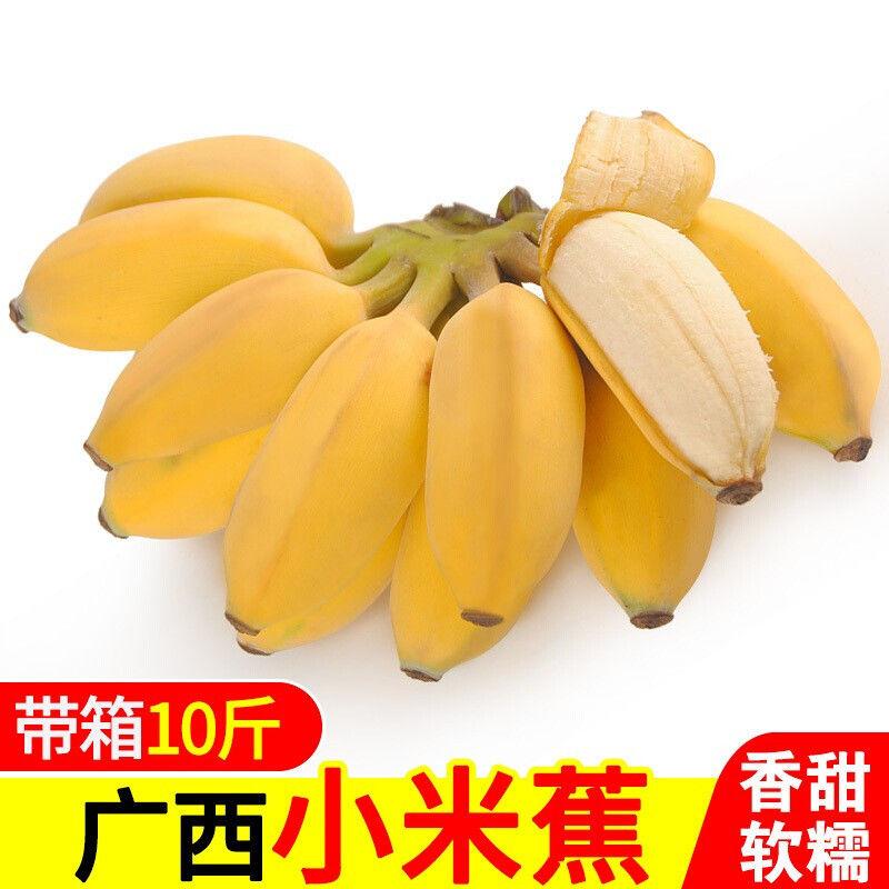 广西新鲜小米蕉带箱10斤香蕉banana当季新鲜水果应季包邮小米焦5