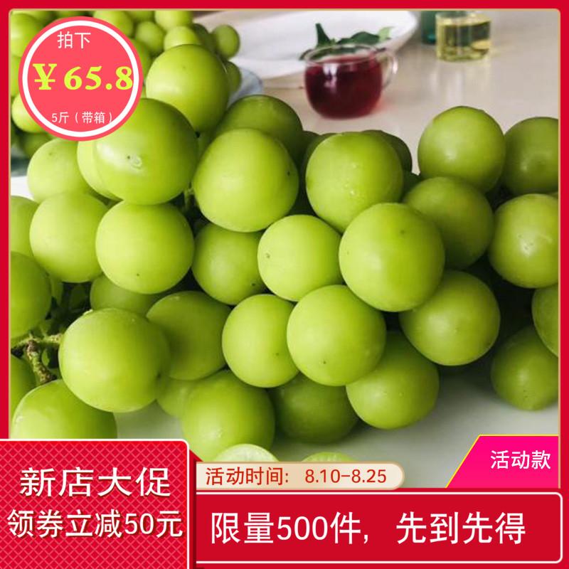 阳光玫瑰晴香印青提网红葡萄产地直销坏果包赔低价冲量款 5斤整箱