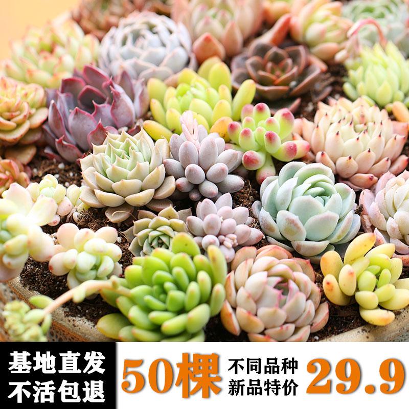 绿盼新款多肉盆栽组合套装植物花卉园艺带盆带土欧式办公室内绿植