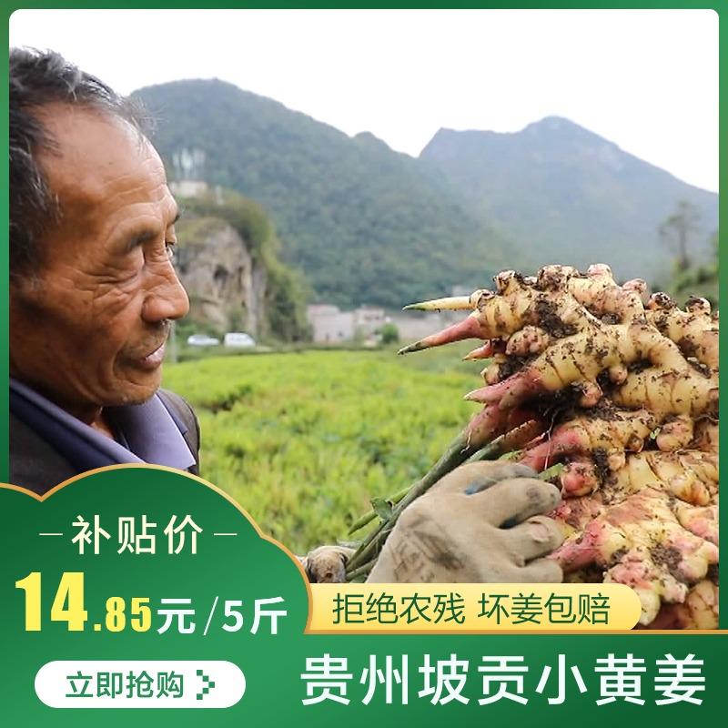 贵州坡贡小黄姜 新姜月子姜老姜 新鲜蔬菜生姜姜母嫩姜土姜5斤装