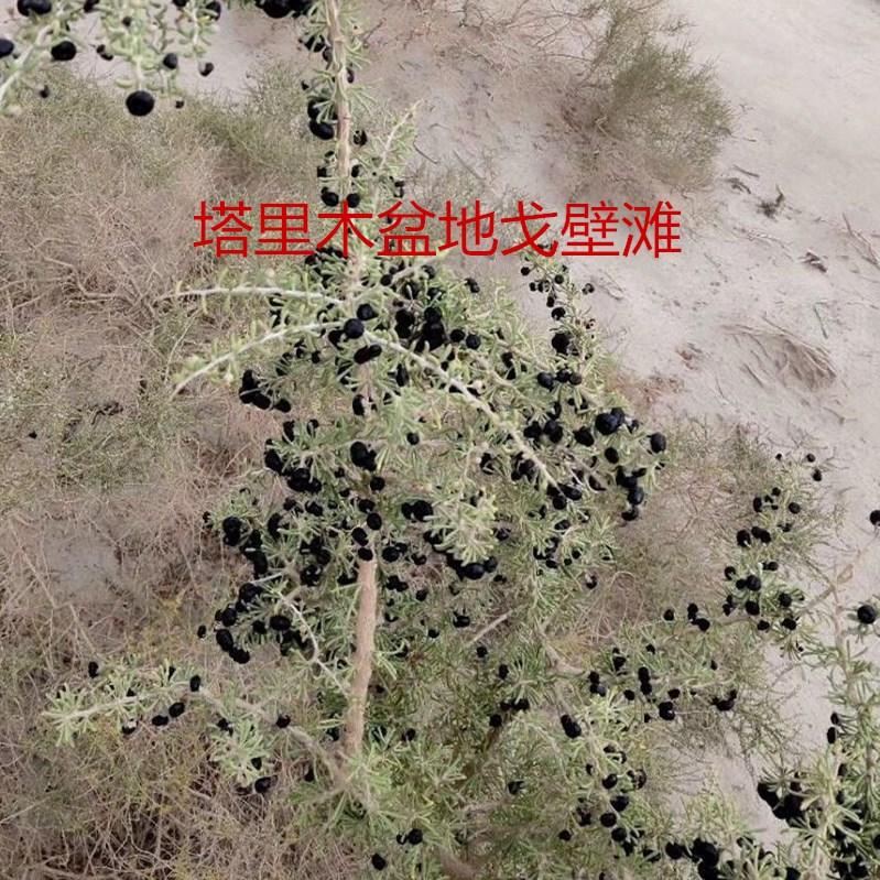 正宗新疆原产黑枸杞一斤非产地青海宁夏酸性水质紫色碱性水是蓝色