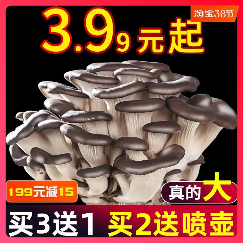 蘑菇菌包平菇菌种菌菇种植包香菇家种家庭食用盒子自己种新鲜冬季