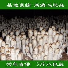 鸡腿菇新鲜蔬菜食材2se7基地现摘04第2件半价菌菇蘑菇