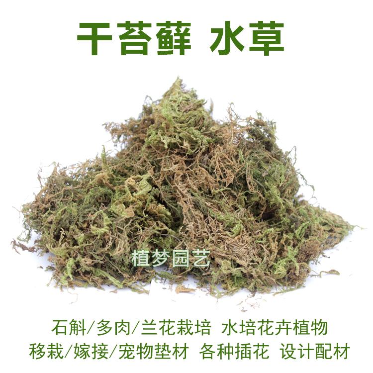 干水苔干苔藓青苔育苗嫁接石斛兰花土乌龟冬眠