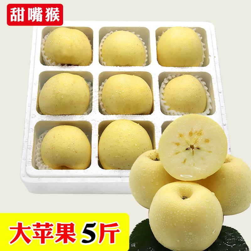甜嘴猴 山东烟台奶油富士苹果农家特产黄金富士新鲜水果大苹果5斤