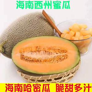 Hainan cantaloupe fresh fruit 10 catties Xizhou honey net text season full box of melon Western Zhou exquisite crisp melon