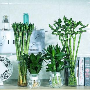 富贵竹观音竹转运竹水培植物花卉