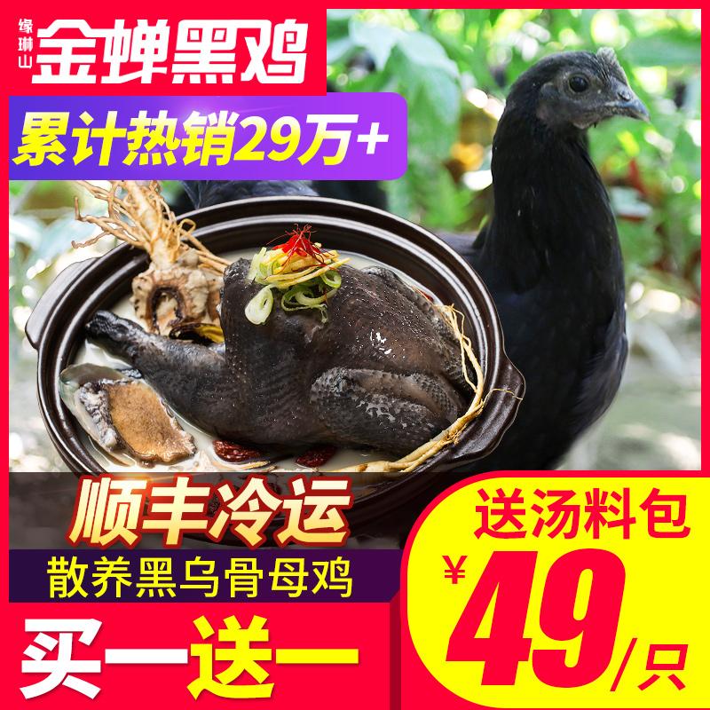 正宗黑乌鸡新鲜土鸡农家散养乌骨鸡整只冷冻老母鸡走地草鸡五黑鸡