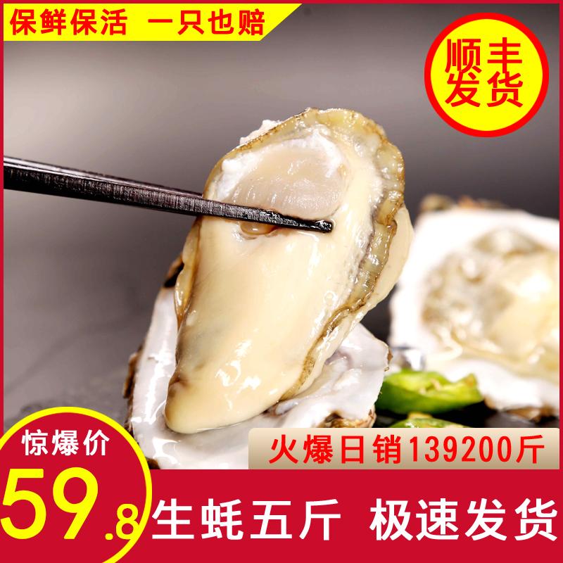 山东日照生蚝5斤鲜活新鲜带壳牡蛎海蛎子薄壳火锅烧烤食材肉饱满