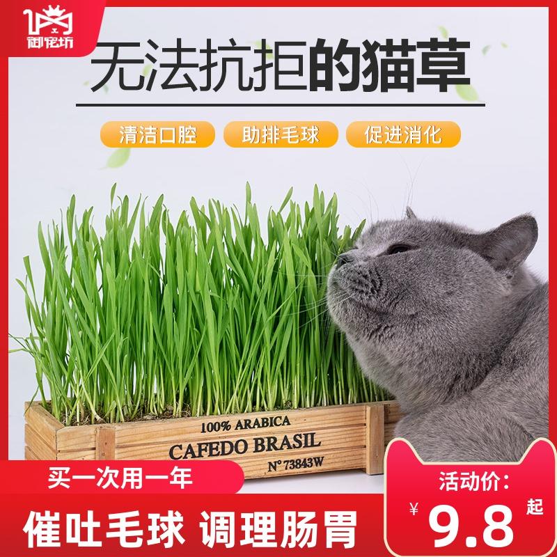 猫草种子水培猫薄荷猫零食除毛球化毛膏猫草种籽种植套装猫咪用品
