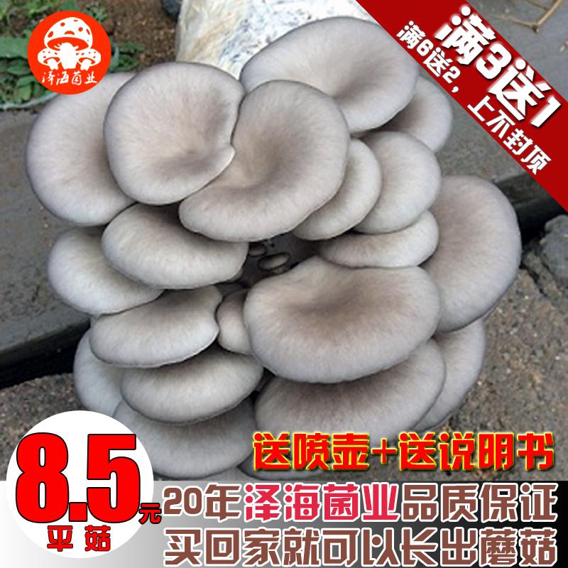 平菇蘑菇菌包食用菌菌种蘑菇种植包棒多肉植物盆栽种植蘑菇菌种子