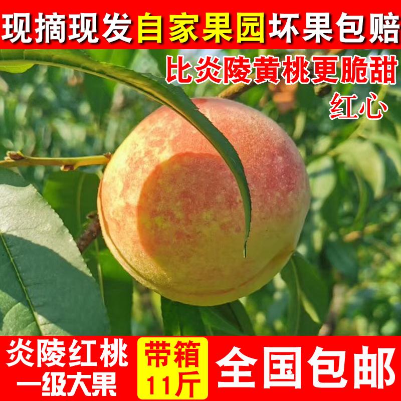 正宗台湾炎陵紅桃孕婦當季新鮮水果高山桃子比炎陵黃桃更脆甜10斤