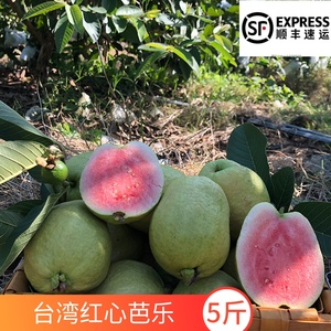 5 pounds Taiwan pearl red heart guava guava red meat fresh tropical fruit wholesale