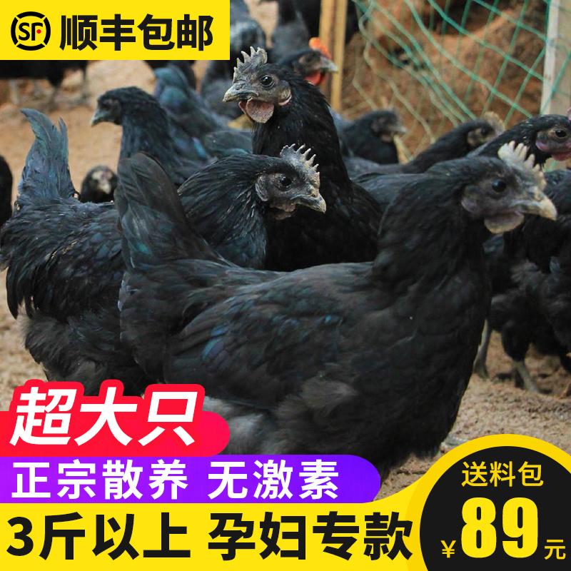 孕妇专属3斤乌鸡新鲜整只现杀农家散养乌骨鸡老母鸡草鸡图片