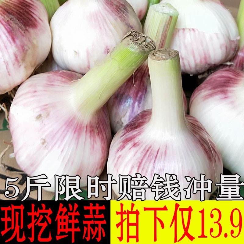 2019现挖鲜蒜新鲜开封大蒜头5斤混装紫白皮湿蒜多瓣非独头蒜干。