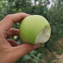 南粤优品山西青苹果5斤现摘新鲜苹果酸甜脆口孕妇水果整箱10斤