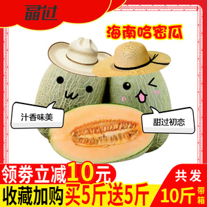 Hainan Province Xizhou Honey Cantaloupe Xiaomi Reticulated Melon Fresh Box with Box 10 kg Seasonal Fruit Melon