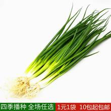 庭院阳台 四季(小)香7k6种子 盆k8菜种子籽四季播易种
