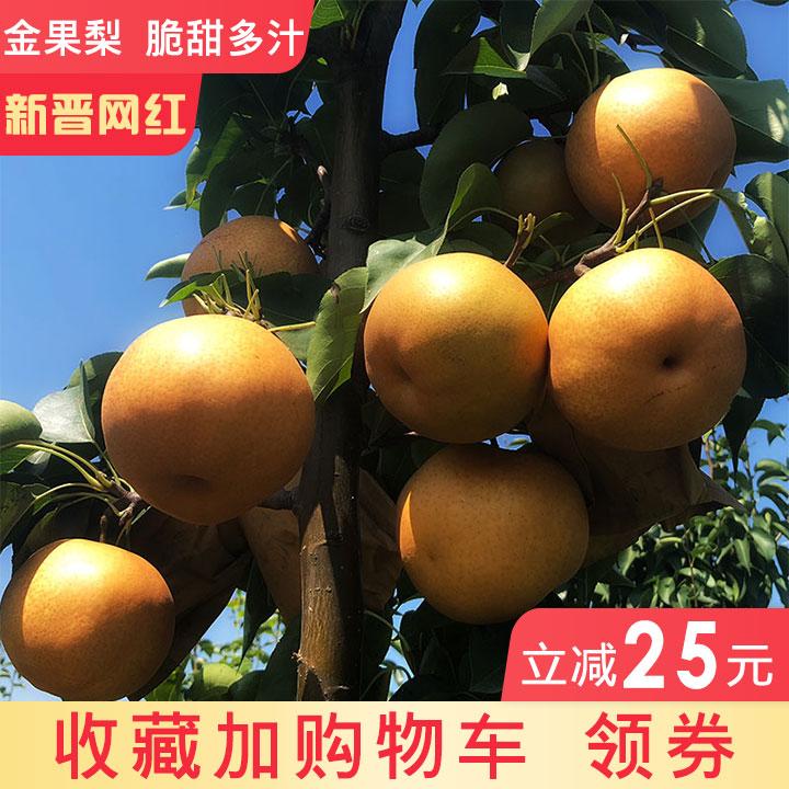 梨子新鲜水果金果梨脆梨皮薄梨孕妇非雪梨丰水梨5斤包邮整箱梨子