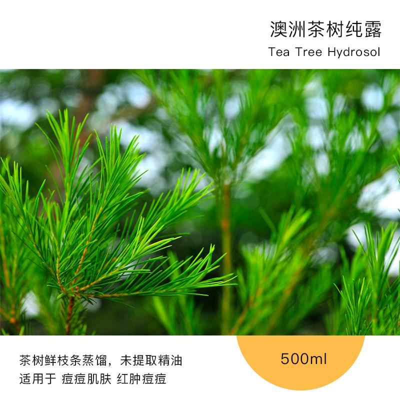 澳洲茶树纯露 新鲜枝条 1:1浓度 控油 有效祛红肿痘痘 500ml包邮