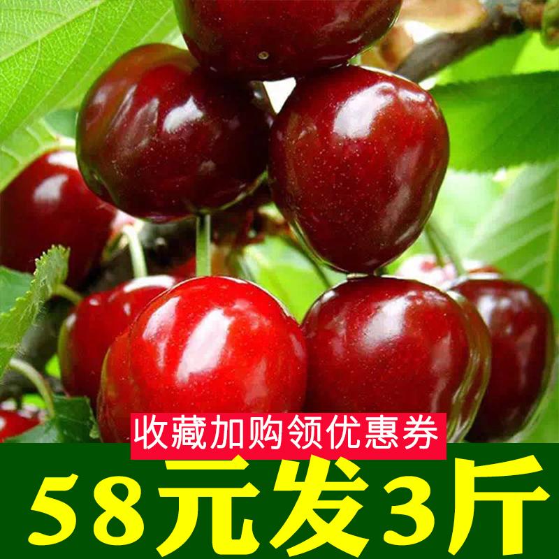 3斤山东烟台大樱桃 新鲜车厘子5烟台特产水果10非大连智利1.5kg