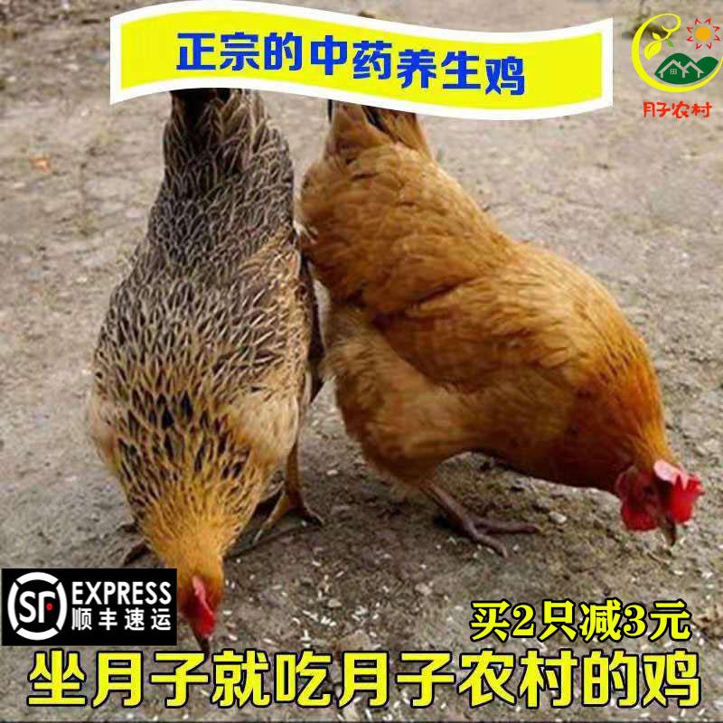 农家散养2年老母鸡散养土鸡柴鸡月子草鸡笨鸡走地鸡公鸡活鸡现杀