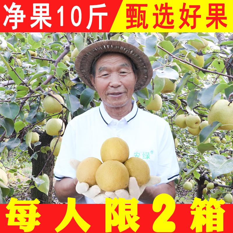 点击查看商品:【净梨10斤 品牌包装】新鲜砀山酥梨 水果整箱包邮皇冠雪梨香梨子