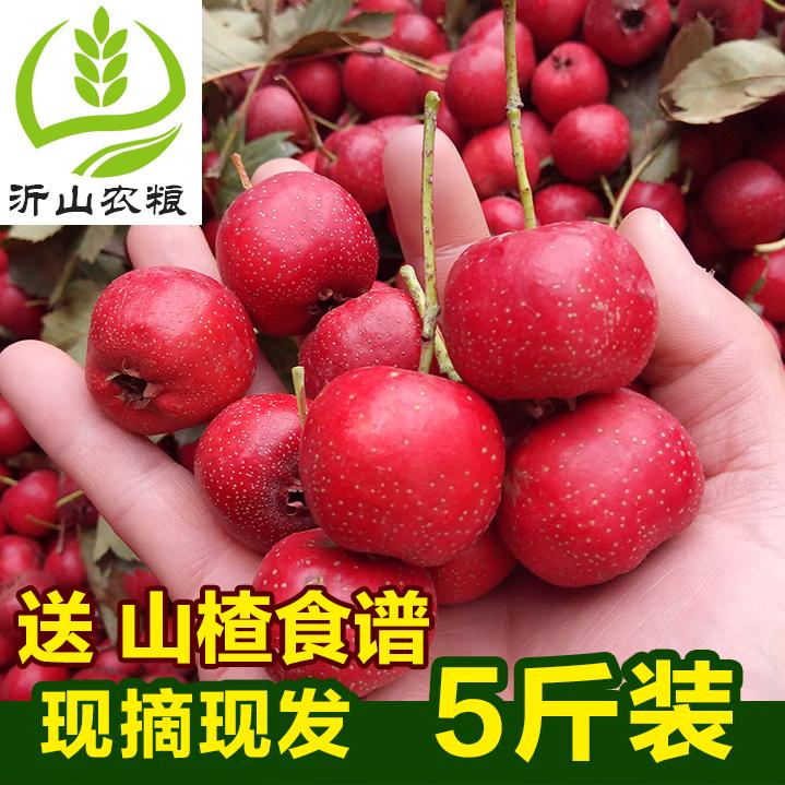 新鲜山楂水果农家自种鲜大山楂果现摘现发沂蒙红果5斤装包邮