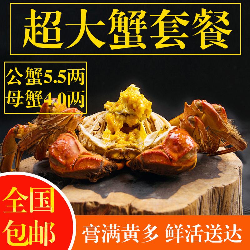 现货阳澄湖镇大闸蟹公5.5两母4.0两6只礼盒装鲜活特大全公母螃蟹